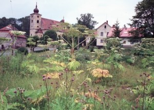 kirchenbirk1987
